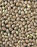 Hemp seed Stock Photos