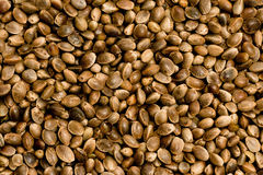 Hemp Seed Royalty Free Stock Photos