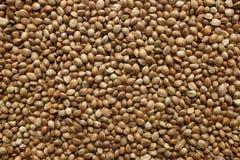 Hemp seeds background Stock Images