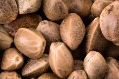 Hemp seeds close up Royalty Free Stock Image