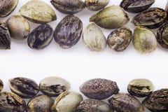 Hemp seeds Stock Image