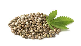 Hemp seeds with a green leaf Stock Photos
