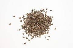 Hemp seeds or hemp nuts Royalty Free Stock Photography