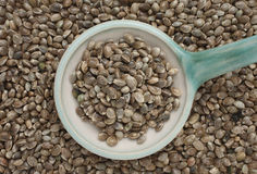 Hemp seeds or hemp nuts Royalty Free Stock Photography