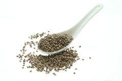 Hemp seeds or hemp nuts Royalty Free Stock Image