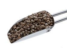 Hemp seeds or hemp nuts Royalty Free Stock Images