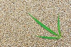 Hemp seeds with leaf Royalty Free Stock Photos