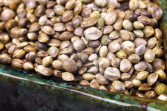 Hemp seeds in macro Stock Photo