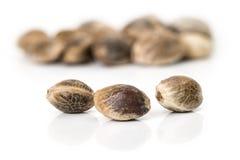 Hemp seeds macro photo Royalty Free Stock Image