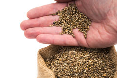 Hemp seeds in a sack Royalty Free Stock Photography