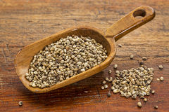Hemp seeds scoop Stock Photography