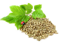 Hemp seeds, twig and ladybug isolated Stock Photo