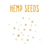 Hemp seeds. Vector EPA 10 hand drawn illustration Royalty Free Stock Photos
