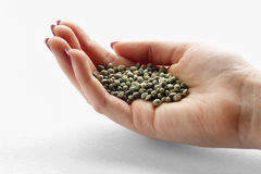 Hemp seeds in a woman's hand Stock Photos
