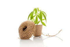 Hemp string. Stock Images