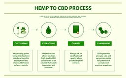 Hemp to CBD process horizontal infographic. Healthcare and medical illustration about cannabis royalty free illustration