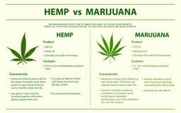 Hemp vs Marijuana vertical infographic vector illustration
