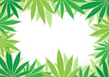 Hemp white background Royalty Free Stock Images