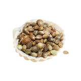 Hempseed in shell isolated Stock Images