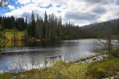 Hemsökte träd, bergigt landskap, sjö Laka, Šumava, Tjeckien fotografering för bildbyråer