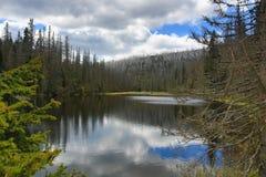 Hemsökte träd, bergigt landskap, sjö Laka, Šumava, Tjeckien arkivfoto