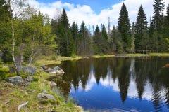 Hemsökte träd, bergigt landskap, sjö Laka, Šumava, Tjeckien royaltyfria foton
