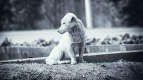 Hemsjuk hund Royaltyfria Foton