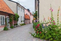 Hemtrevlig gata med blommande malvor och rosor Fotografering för Bildbyråer