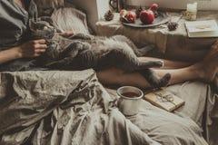 hemtrevlig utgångspunkt Kvinna med gulligt kattsammanträde i säng vid fönstret Arkivbilder