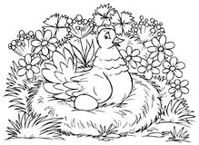 Hen. Black-and-white outline (for a coloring book): hen with an egg sits on a nest stock illustration