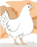 Hen. A plump farm free range chicken Royalty Free Stock Image