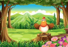 A hen above the stump at the forest Stock Photography