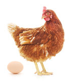 Hen And Egg Royalty Free Stock Photos