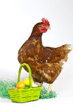 Hen with a basket full of eggs Stock Photo