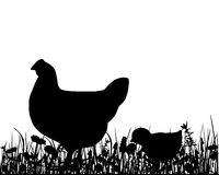 Hen an chick in the meadow Royalty Free Stock Photo