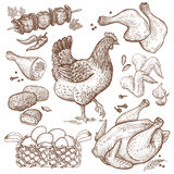 Hen and chicken dishes. Bird and food objects. Sketch of poultry hen. Split carcass of chicken, wings, legs, skewers of chicken, nuggets, basket eggs isolated stock illustration