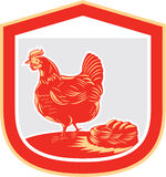 Hen Chicken Nest Egg Shield Retro- Stockbild