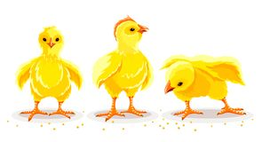 Free Hen Chicken. Newborn Little Domestic Poultry Birds. Vector Illustration. Stock Photography - 144588912