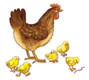 The hen with chickens. The brown hen and five yellow chickens Royalty Free Stock Image