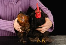 Hen and cock Royalty Free Stock Photos