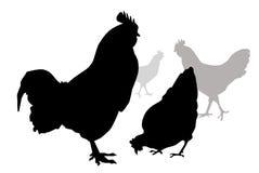 Hen & Cock-Vector Stock Photography