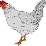 Hen color Royalty Free Stock Images