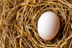 Hen or duck egg on straw Royalty Free Stock Image
