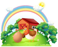 A hen and an egg near the wooden house Stock Photos