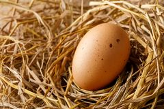 Hen egg on straw stock images
