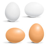 Hen egg. White and brown hen egg stock illustration