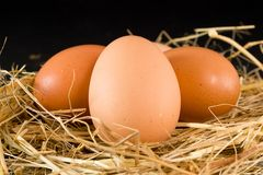 Hen eggs Stock Images