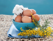 Hen eggs, cotton flowers and mimosa Royalty Free Stock Image