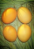Chicken four eggs in outdoor stock photo