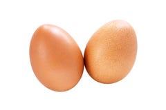 Hen Eggs på vit bakgrund royaltyfri bild